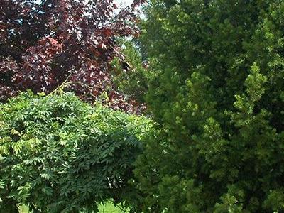 Ogród 0